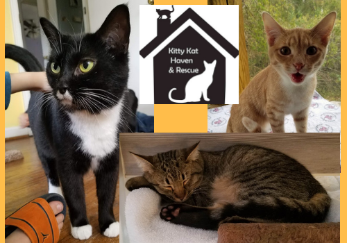 Featured adoptable kitties at Kitty Kat Haven & Rescue, cats, kittens, for rescue and adoption in Hoover, near Birmingham, Alabama