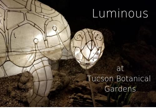Luminous at Tucson Botanical Gardens Tortoise