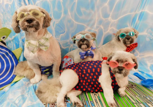 Shaggy Chic Pet Grooming in Alabaster, Alabama is having a fundraiser with discounted baths for dogs.