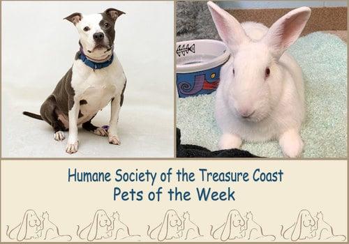 HSTC Macaroni Pets of the Week Luna and Romania