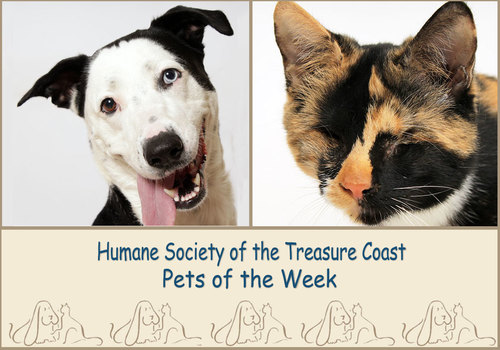 HSTC Macaroni Pets of the Week Neka and Peanut Jr.