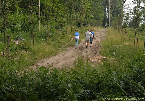 Nature Walk Guided Hike