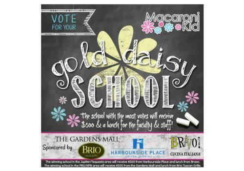 Gold Daisy School Contest