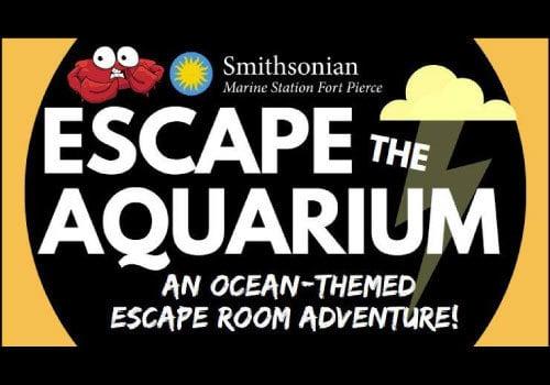 Escape the Aquarium at the Smithsonian Marine Station