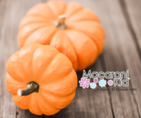 Pumpkin patch guide | macaroni kid.