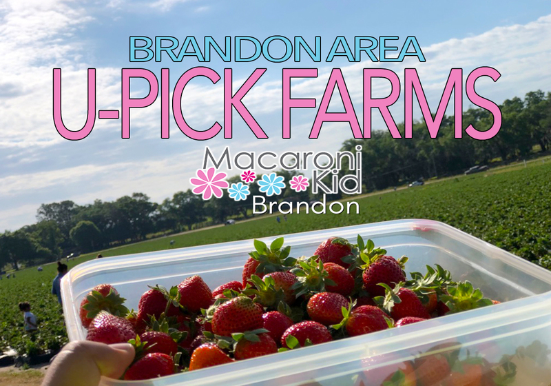 Fresh Strawberries picked straight from a farm.