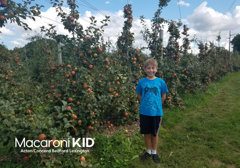 Boy in apple orchard