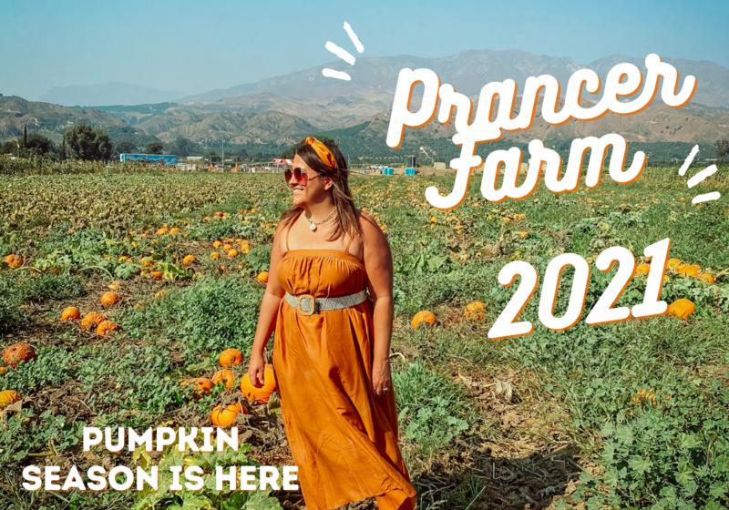Prancer Farm Pumpkin Patch Ventura County