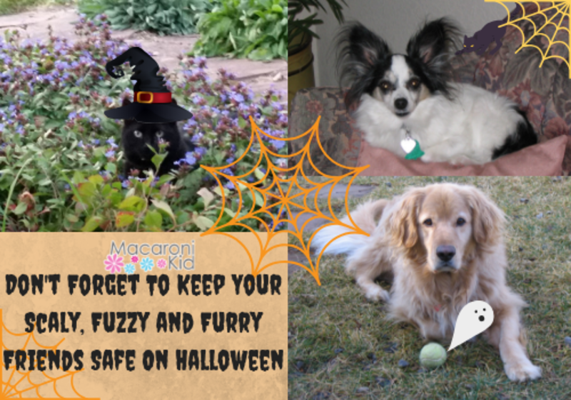Don't Forget To Keep Your Fuzzy and Furry Friends Safe On Halloween