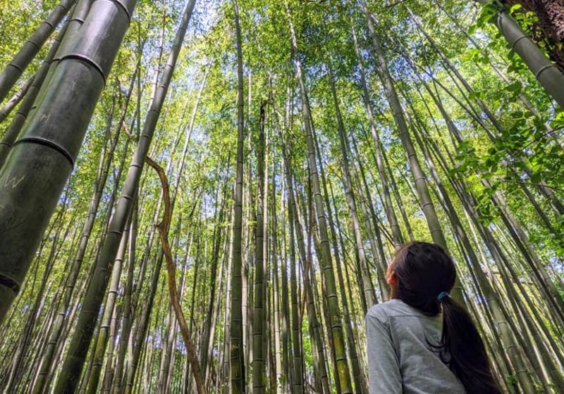 Girl looking up at bamboo