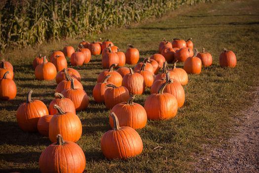 Berkshire county pumpkin patches and corn mazes   macaroni kid.