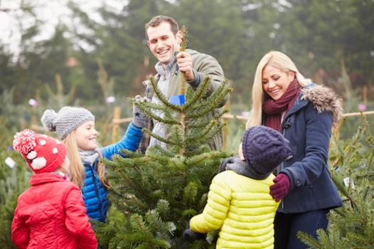 Christmas Tree Farms near Lincoln, NE 2018 - Christmas Tree Farms Near Lincoln, NE 2018 Macaroni Kid
