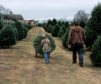 visit one of these lebanon county tree farms - Cut Your Own Christmas Tree Farm
