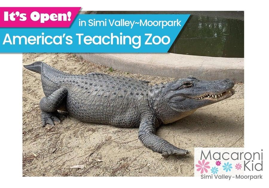 America's Teaching Zoo - Alligator