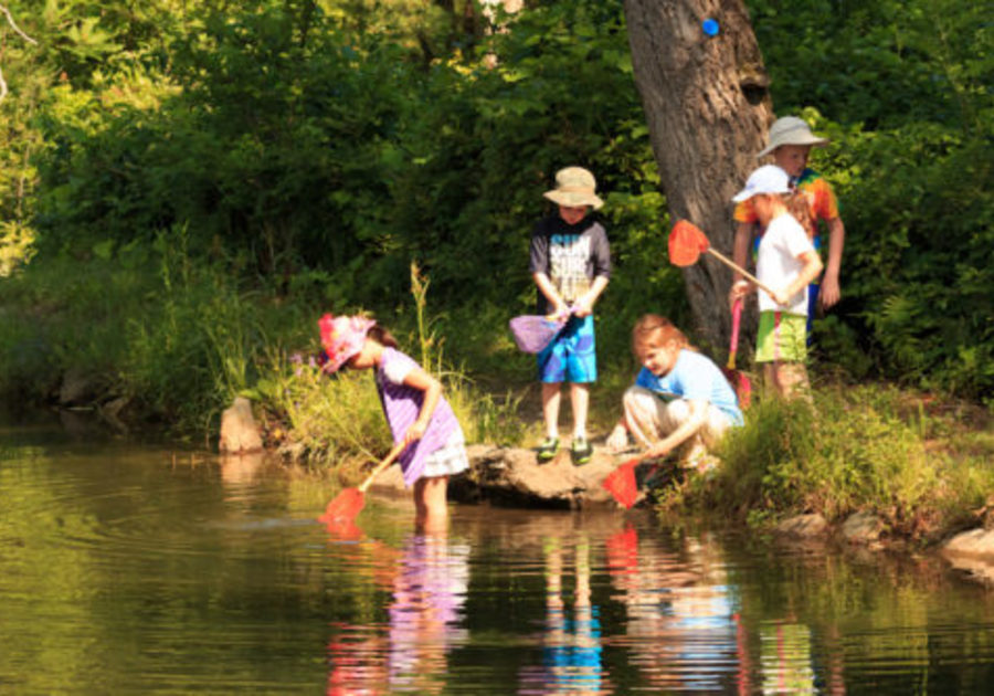 children fishing with nets at pond pleasant valley nature camp