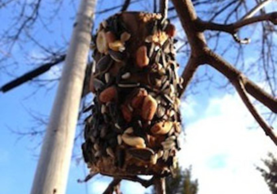 Welcome the Birds to Your Backyard with a bird feeder kids can make