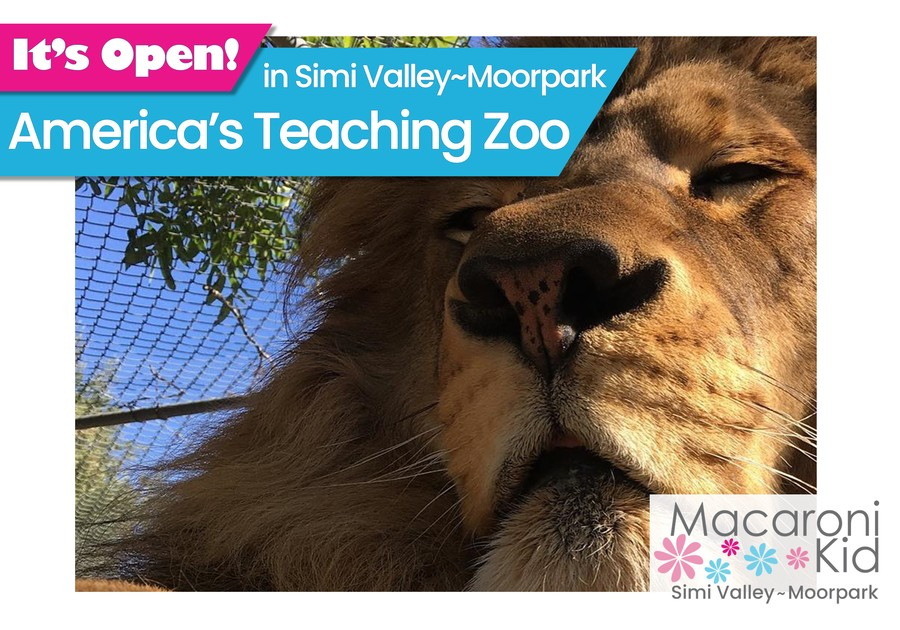 It's Open - America's Teaching Zoo. Image of Lion's face in the sun