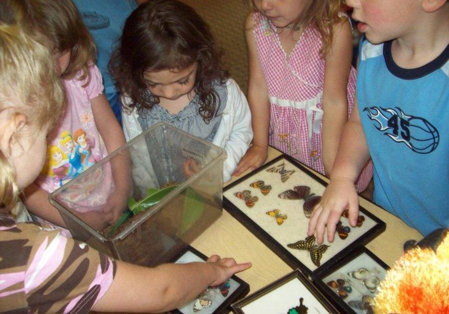 Kids and Butterflies Little Bears