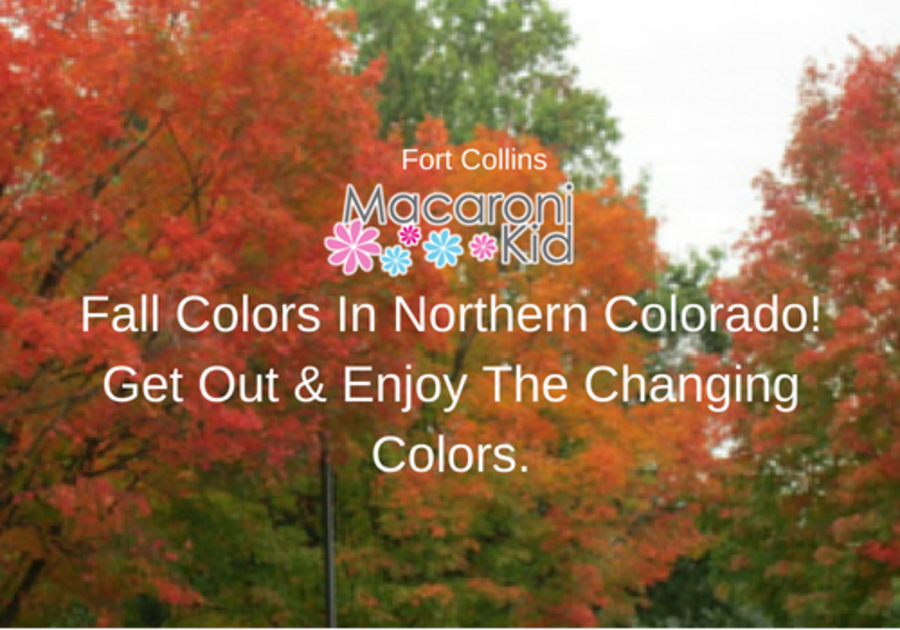 Fall Colors In Northern Colorado Fort Collins