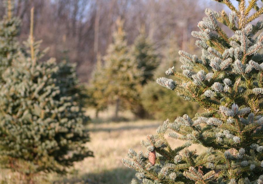 Pioneer Trails Tree Farm