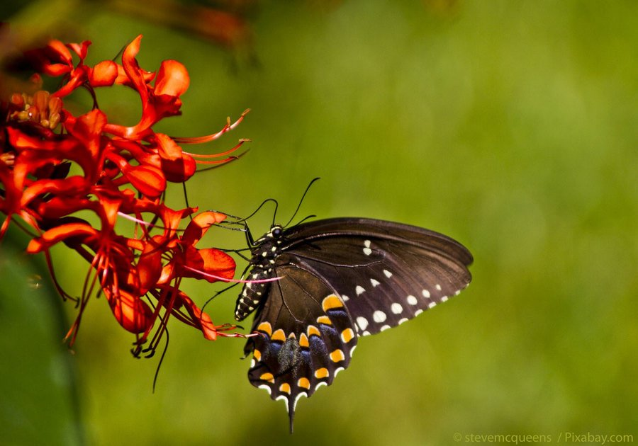 Florida Butterfly