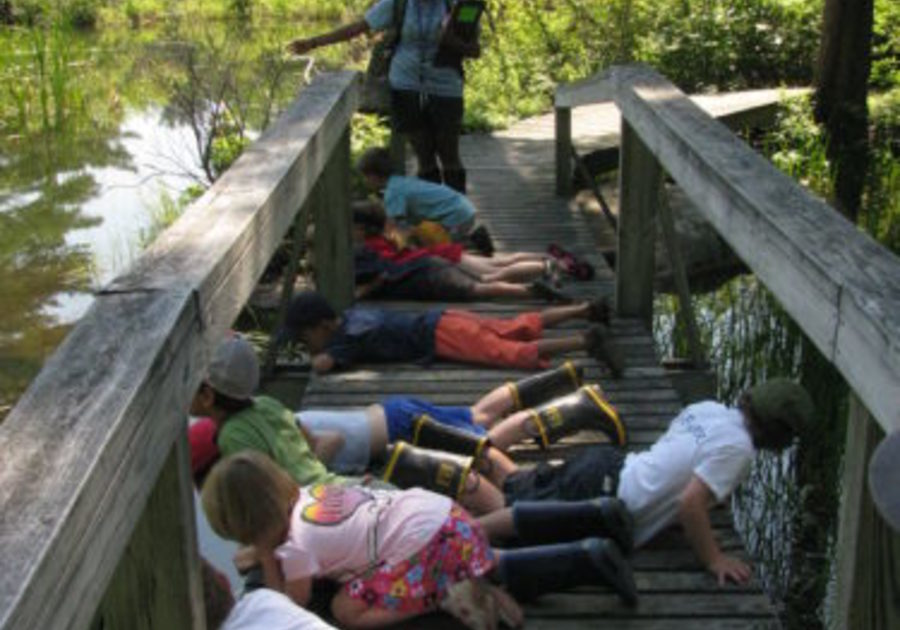 children lying on bridge over a pond at pleasant valley wildlife camp