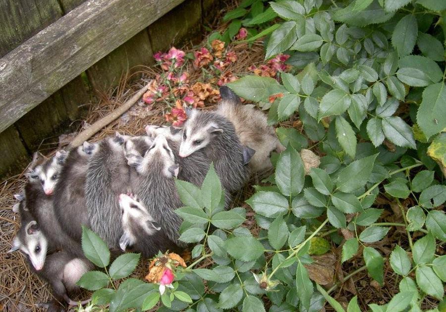 Participate in Alabama Backyard BioBlitz on June 5, 2020