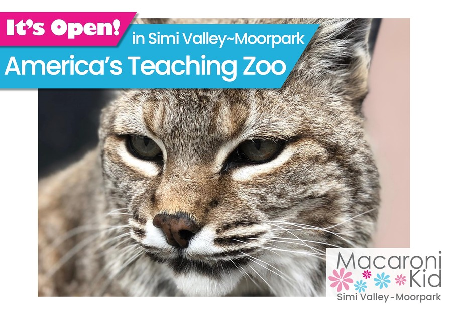 It's Open - America's Teaching Zoo. image of big cat's face