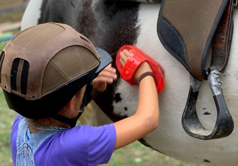 Berkshire Horseworks girl brushing horse