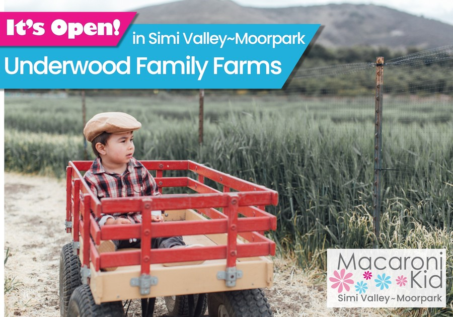 It's Open in Simi Valley and Moorpark! Underwood Family Farms. Photo of young boy in red wagon parked in the middle of a clearing in a field.
