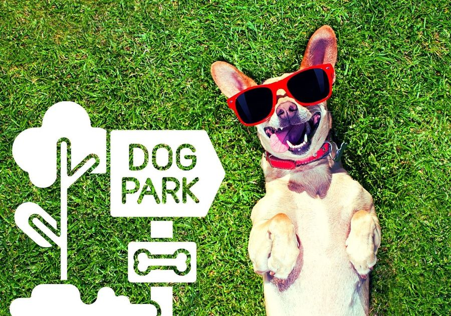 Guide to Area Dog Parks