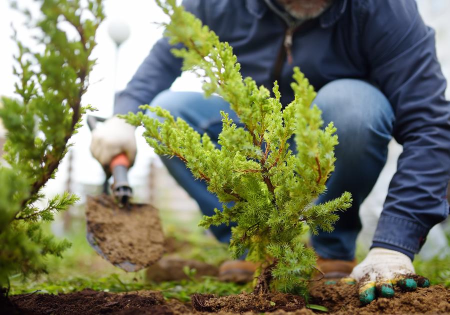 free tree seedlings in Bergen County