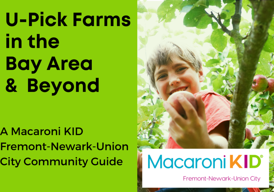 U-Pick Farms in the Bay Area and Beyond