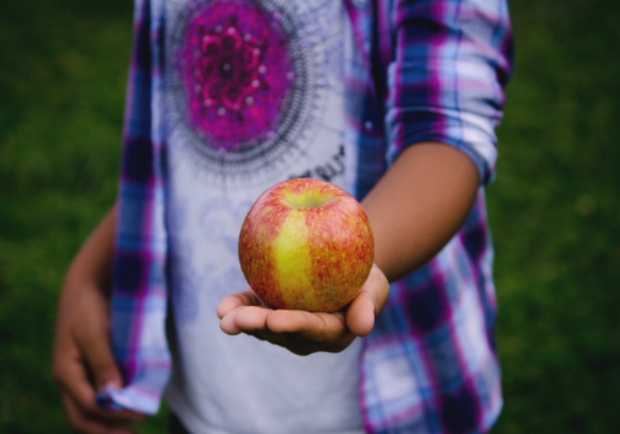 Going Apple picking with kids