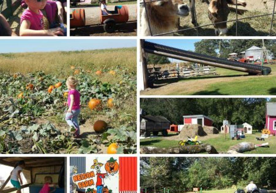 Pumpkin Patch Festival At Nelson Family Farm Litchfield Mn Macaroni Kid Carver
